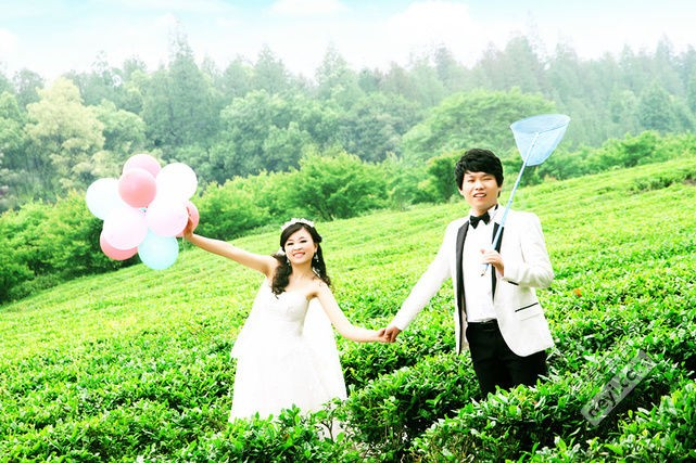 壁纸 成片种植 风景 婚纱 婚纱照 植物 种植基地 桌面 641_427